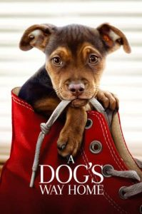 فيلم المغامرة العائلي A Dogs Way Home 2019 مترجم